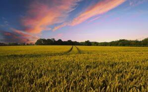 Na co zwrócić uwagę przy zakupie ładowarki rolniczej