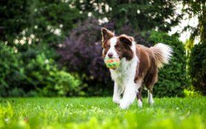 Skórzane obroże dla psa